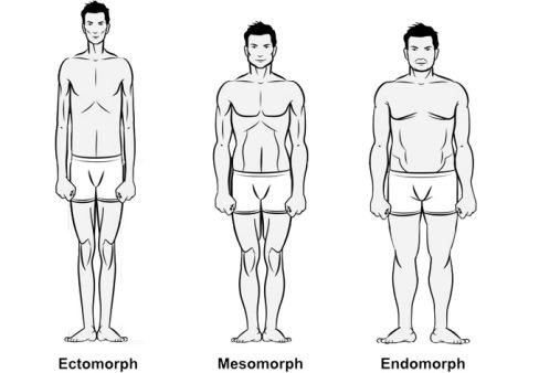 Ectomorph-1