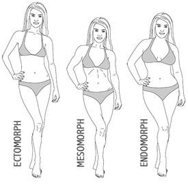 tipe-tubuh